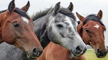 Tierhalterhaftpflicht vergleichen