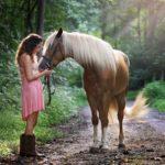 Pferdehaftpflichtversicherungen vergleichen