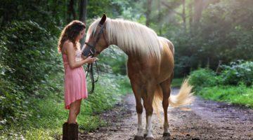 Pferdeversicherung vergleichen