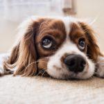 Hundhaftpflichtversicherung - Wann tritt sie in Kraft und wo findet man den besten Tarif?