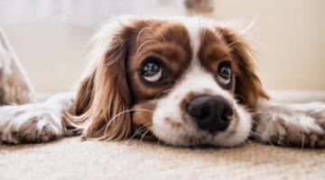Hundeversicherung vergelichen
