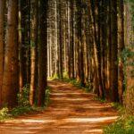 Das Waldinvestment – eine gute Geldanlage?